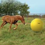 Power Play Ball