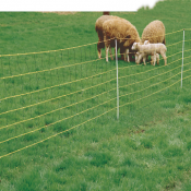 Netting for Sheep and Poultry