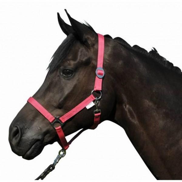 Head collar -Stars Economy-