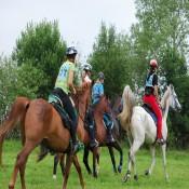 Equestrian Endurance