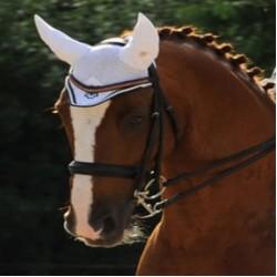 Tournament Equipment/Horse Transport